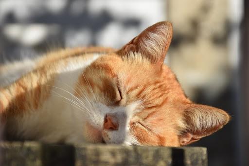 Mise en sommeil SARL